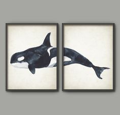 Killer Whale Watercolor Wall Art Poster Set Of 2  by QuantumPrints