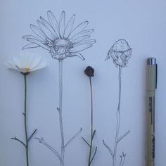 ✧ // define yourself // ✧ Illustration Botanique, Botanical Illustration, Illustration Art, Flower Illustrations, Doodles Zentangles, Botanical Art, Miraculous Ladybug, Art Lessons, Art Inspo
