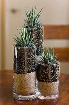 Unique and Creative Succulents in Glass Indoor Garden Ideas Inspirational Easy Diy Sukk . Unique and Creative Succulents in Glass Indoor Garden Ideas Inspirational Easy Diy Succulent Planter Ideas Plants Succul. Succulents In Glass, Cacti And Succulents, Planting Succulents, Planting Flowers, Propagate Succulents, Succulent Planter Diy, Diy Planters, Succulent Centerpieces, Succulent Ideas