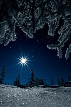 magical sparkles of winter