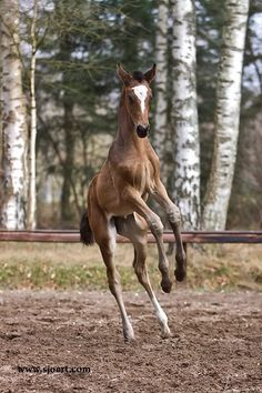 He is like - ohh noo I am not getting my saddle on lol