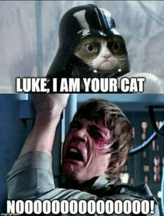 Top 18 Best Grumpy Cat Memes Can anything brighten a day quite like a funny cat? These hilarious cat memes are guaranteed to make you crack a smile. Hope you enjoy them and don't forget to share to your friends! Grumpy Cat Good, Grumpy Cat Disney, Grumpy Cat Quotes, Funny Grumpy Cat Memes, Funny Animal Jokes, Cute Funny Animals, Funny Cats, Cute Cat Memes, Animal Humor