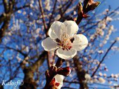 La semplicità di un fiore