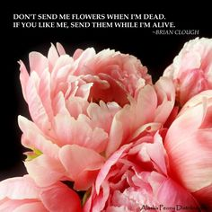 Putting things in perspective.  #quote #flowers #peonies #peony