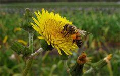 Águas de Pontal: Diminuição de abelhas e outros polinizadores ameaç...