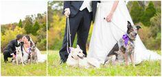 Mountain Wedding   Bride + Groom + Dogs