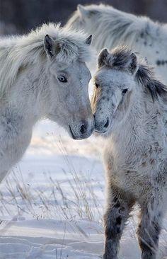 Winter cuddle via horse heaven