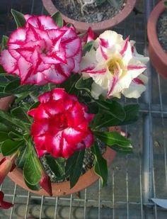 Flores -bellos colores