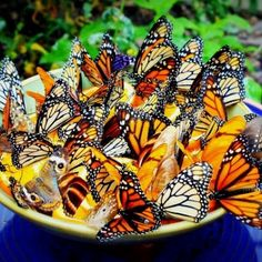Step-by-step instructions for making two simple butterfly feeders. Includes instructions for making nectar.  #GardenIdeas