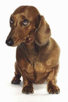FDA: Nearly 1,000 Pets Sickened by China-Made Dog Treats