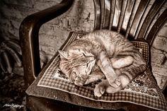 Sueño Profundo  Foto Alex Bedoya| Flickr: Intercambio de fotos