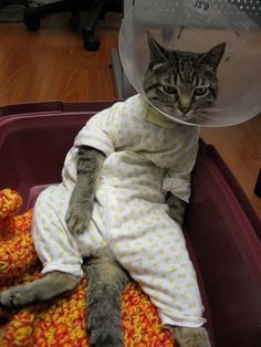 Cat on the mat. The cat sat on the mat...and hated every second of it. We can think of many reasons as to why this cat doesn't look too impressed. Firstly, she's got a cone around her neck from an injury, and secondly, she's wearing a onesie! Does it get any more embarrassing than that?