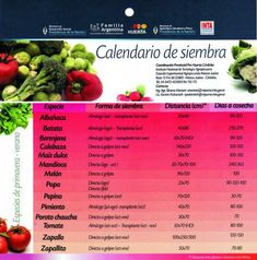 Calendario de siembra - Pro Huerta - Primavera/Verano