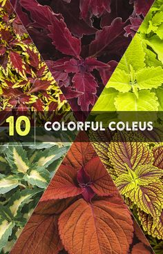 26 Best Foliage Plants Images In 2020
