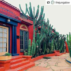 Orange Adobe home dwelling exteriors dwelling with yard cactus plants Desert Homes, Shopping World, Southwest Style, Mexican Style, Mexican Hacienda, Cacti And Succulents, Cactus Plants, Spanish Style, Beautiful Places