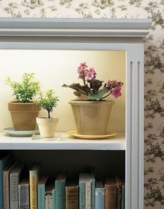 Grow lights inside a book case...great idea! Herb garden maybe?