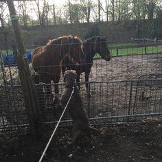 Gezellig bij de paardjes