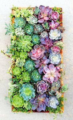 Succulent containing vertically - love these colours!  Links to some beautiful ideas.