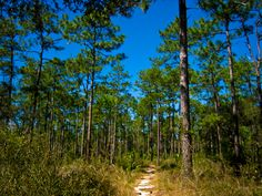 Florida Trail, Clearwater Lake to Alexander Springs
