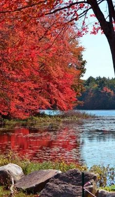 Leaves on the Water.. New England, USA