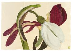 Sarah Graham, artist, botanical works on paper, 2008 to present. Botanical Drawings, Botanical Illustration, Botanical Prints, Sarah Graham Artist, Wildflower Drawing, Flower Artists, Watercolor Flowers, Art Flowers, Watercolour