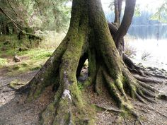http://pictures.mastermarf.com/blog/2008/080518-root-formation.jpg