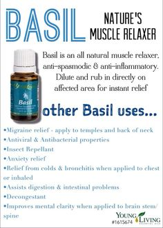 Many uses for Basil Essential oil as a natural muscle relaxer, anti inflammatory and anti-spasmodic. Replaces Valium, Xanax, etc as muscle relaxing. Young living oils.