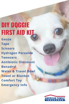 Your dog is more than just a pet. They are your four-legged running buddy, your fluffy companion and the cutest protector of the family. Keeping a doggie first aid kit with you when you take your pup out for a hiking trip or swim in the lake can keep your best friend safe. Here's everything you'll need to make your own portable doggie care kit. Running Buddies, Emergency Vet, Insurance Quotes, First Aid Kit, Safety Tips, Four Legged, Pup, Best Friends, Hiking