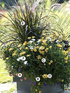 Try grasses instead of the same old thing this year! (Later you can place the grasses in a perennial bed) A= Calibrachoa ' Millian Bells Terra Cotta' (3); B= Calibrachoa ' superbells Trainling Blue' (3); C= Calibrachoa 'Million Bells Terra Linda' (3); D=Osteopermum 'Lemon Sympony' (3); E=Purple fountain grass (1); F= Annual phlox 'Intensia white' (3)
