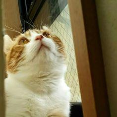 与作ちゃん、お虫?#cat