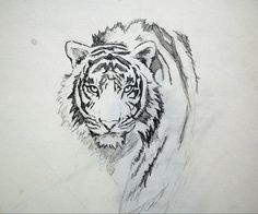 """Chapter 17: The sketch. """"He traced the tiger's face with his finger, then whispered gently, """"Someday, I'll give you a portrait of the real me...I don't want you to see only a tiger when you look at me. I want you to see me. The man."""""""" #tcpinterest"""