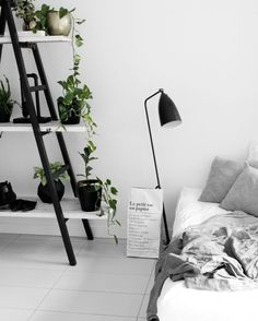 Room for Plants