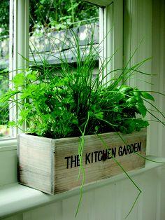 Veg on a ledge Herb garden