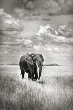 jacekbielarz.com Elephant, Animals, Animales, Animaux, Elephants, Animal, Animais
