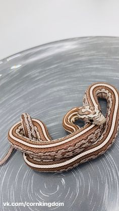 Colorful Snakes, Small Snakes, Rat Snake, Corn Snake, Black Rat, Pets 3, Reptiles, Wedding Rings, Engagement Rings