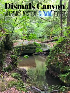 Some say it looks like Middle Earth, some say it's a cross between a rainforest and a fairy tale, and some simply have no words at all to describe the natural wonder that is Dismals Canyon. Alabama's last secret hiding place is one of those sights you have to see to believe. USA