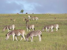 Lalibela Game Reserve and Safari Lodge, Addo Elephant Park, Eastern Cape, South… Game Reserve South Africa, Elephant Park, Port Elizabeth, Tree Tops, African Safari, Boutique Hotels, Cape, Mantle, Cabo