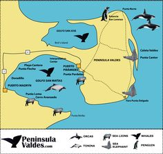 Enjoy sealife in Peninsula Vales with RipioTurismo In Patagonia, Plan Your Trip, Wonderful Places, South America, Chile, Tours, Travel, Argentina, Viajes