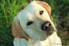 Ein Hund weiß nicht wie man Liebe schreibt. Doch er weiß genau, wie man sie täglich zeigt.