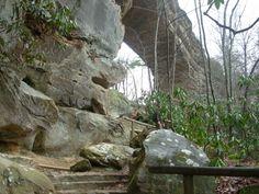 rock bridge trail red river gorge   ... » Natural Bridge-Balanced Rock Trails-Red River Gorge, Kentucky