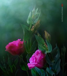 [Restoration Miracle] in JESUS Name*Amen]   [Rose pic]~~by Duong Quoc Dinh~~
