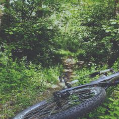 Bike ride through the forest