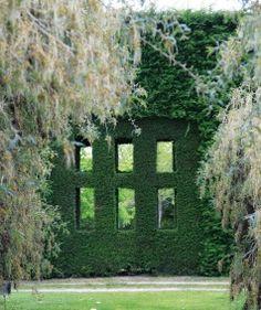 Windows in macrocarpa hedge.