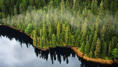 An array of ecosystems will relocate due to global warming, but new research suggests the northward flight of boreal forests could be especially harmful.