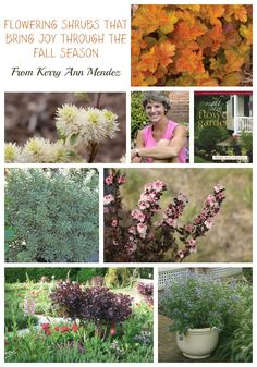 flowering shrubs that bring joy through the fall season garden design