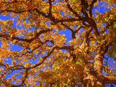 Fall sky in Texas :)