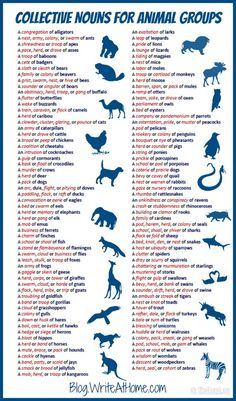 Collective nouns for animal groups - English vocabulary English Writing, English Words, English Lessons, English Grammar, Teaching English, Learn English, English Language, Language Arts, English Articles