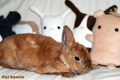 This handmade plush by Yukari spreads the message that rabbits in shelters need homes, and partial sales of the toy are donated to various rabbit and small animal rescues.