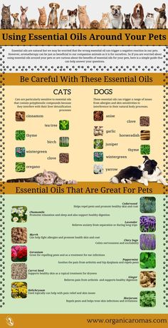 Good and bad essential oils for pets
