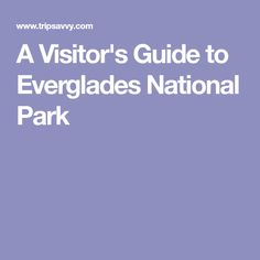 A Visitor's Guide to Everglades National Park